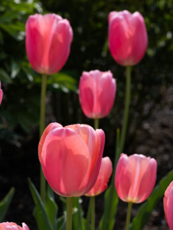 Ogród botaniczny w maju
